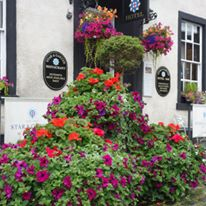 Star And Garter Planters