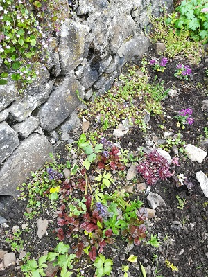 Station Road rockery