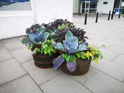 Planter Outside BID Office